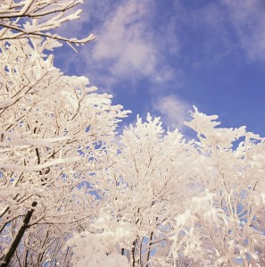 snowy trees and sky