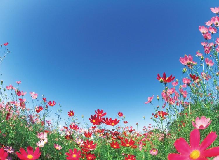flowers for joy